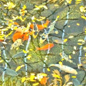 autumn fish pond