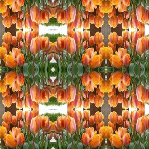 Spring tulips in Orange
