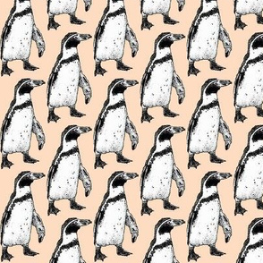penguin coral