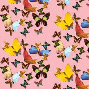 multi-colored butterflies on pink check tell3people