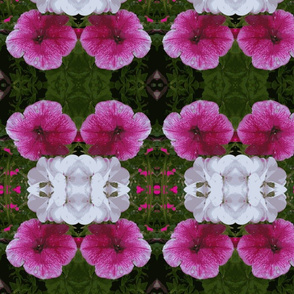 Pink and white summer flowers