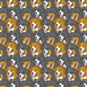 English Shepherd faces