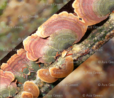 Lichen On Tree Stump