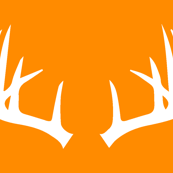 Antlers on orange // great outdoors