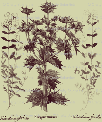 Basilius Besler, 4, background