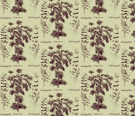 Basilius Besler, 4, background fabric by craftyscientists on Spoonflower - custom fabric