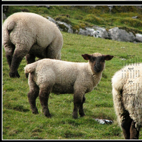 2015 Calendars - Year of The Sheep:  Ewe Lookin' At Me???