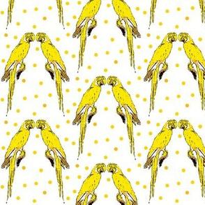 parrots yellow