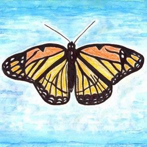 Pretty Viceroy Butterfly