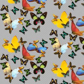 Abundant Butterflies