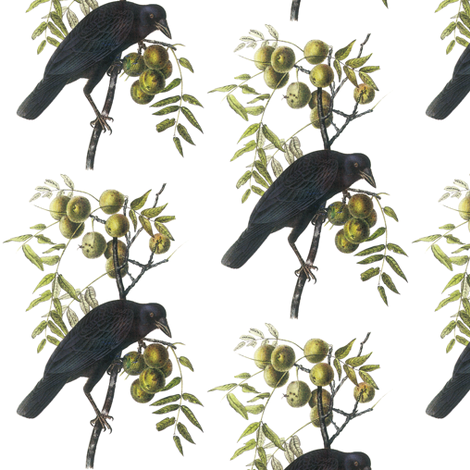 American Crow, Male fabric by craftyscientists on Spoonflower - custom fabric