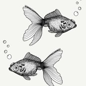 Rbw_goldfish_on_cream_shop_thumb