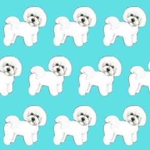 Bichon Frise dogs / white dogs Turquoise