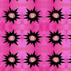 Pink Poppy Burst