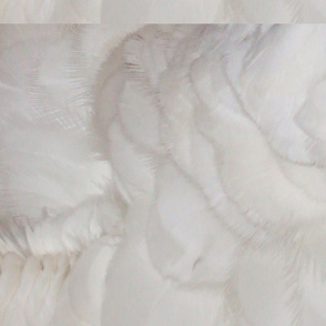 feathers_of_Kimba_super