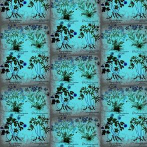 flower5-ed