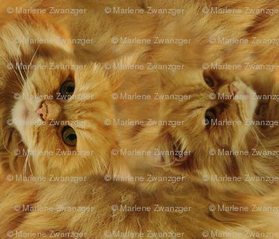 Furry-simbi-cat-pillow2x_preview