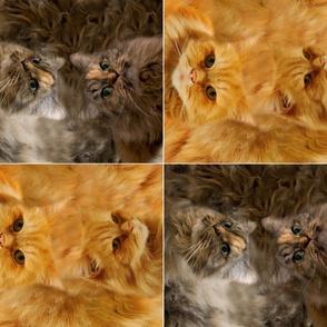 Furry Cat Pillows - Semmi and Simba