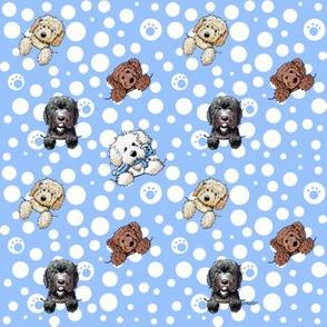 TINY Pocket Doodle Dogs