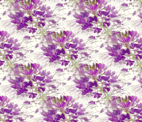 Violet Cleome  on White fabric by missourah_gal on Spoonflower - custom fabric