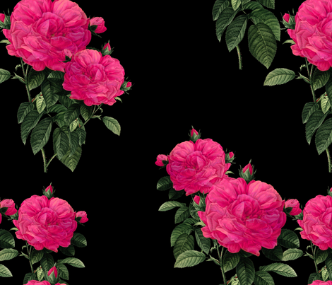 Redoute Rose ~ Hot Pink on Black fabric by peacoquettedesigns on Spoonflower - custom fabric