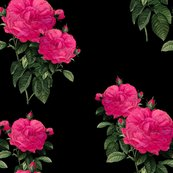 Rrredoute_rose___hot_pink_on_black___peacoquette_designs___copyright_2015_shop_thumb