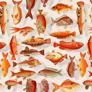 Poissons Rouge