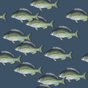 Fish all over