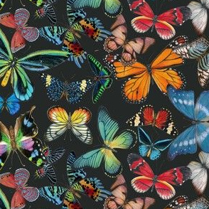 Butterfly Bounty