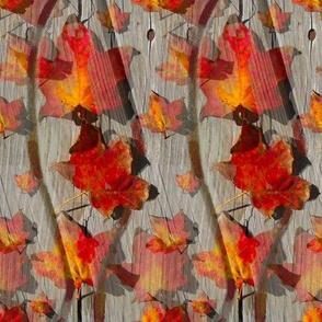 boardwalk leaves