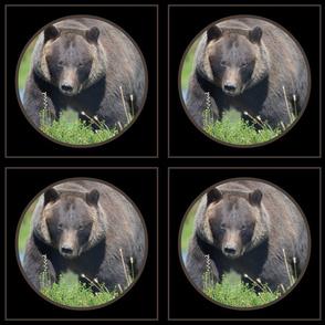 Alaskan Brown Bear Circle Framed