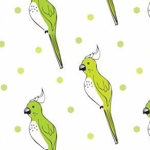 parrot green - elvelyckan