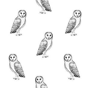 snowy owl sketch