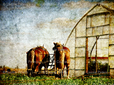 two horses ready for work