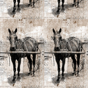 amish horse sepia grunge