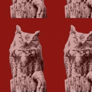 Eastern Screech Owl in Maroon