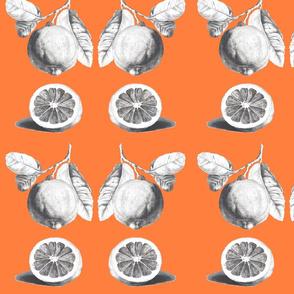 citrus_navel