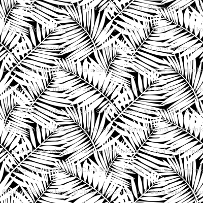 palm leaves in black and white
