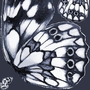 Giant marbled white (Melanargia galathea) butterfly wings