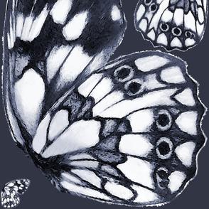Giant marbled white (Melanargia galathea) butterfly wings