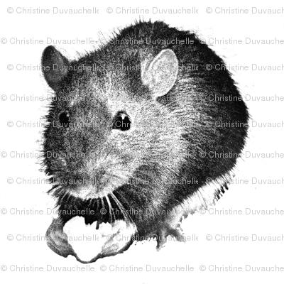 Darwin the High Alcohol Drinking Rat