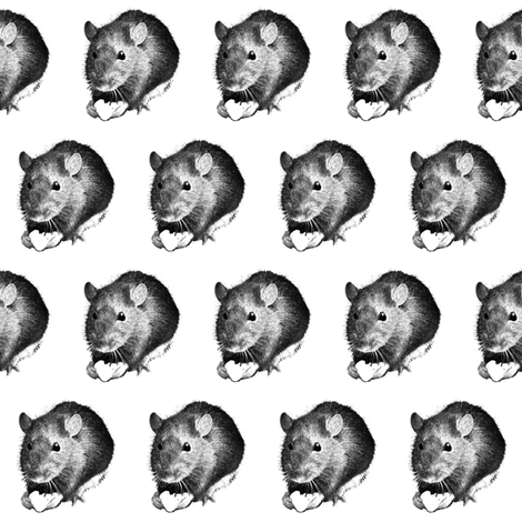 Darwin the High Alcohol Drinking Rat fabric by duvadox on Spoonflower - custom fabric