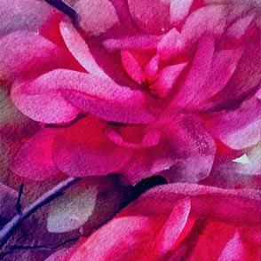 floral_close_up