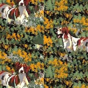 Brittany spaniels in the brush
