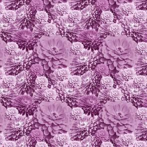 Purple Zinnia Waves