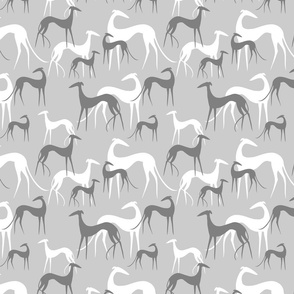 sighthounds clear grey on grey