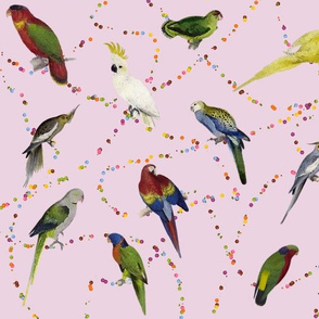 Parrots_and_Candy