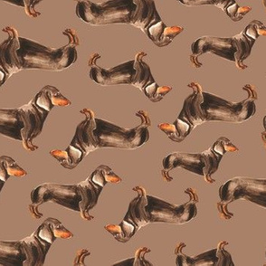 Dachshound on light brown background