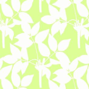green-spring-flush-iris-collection