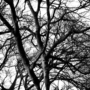 The Tree Lace ~ Black and White ~ Large